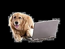 laptop%20dog_edited.png