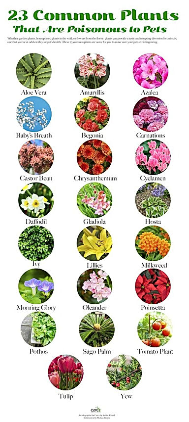 plants toxic.jpg