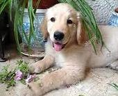 dog%2520plant2_edited_edited.jpg