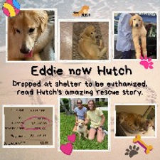 Eddie now Hutch_edited.jpg