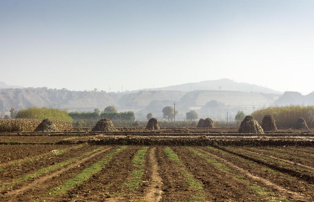 Farmland in China