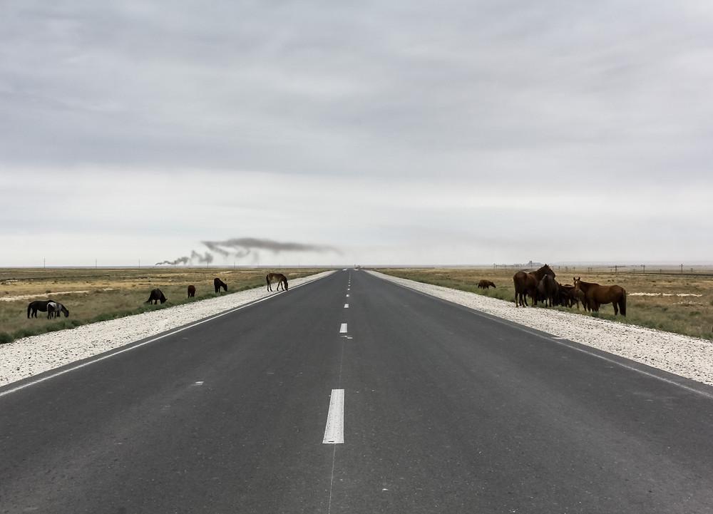 Highway and wild horses in Kazakhstan