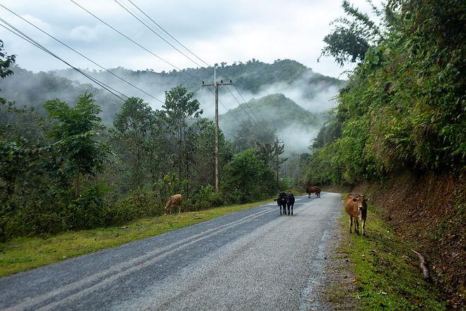 Misty jungle laos