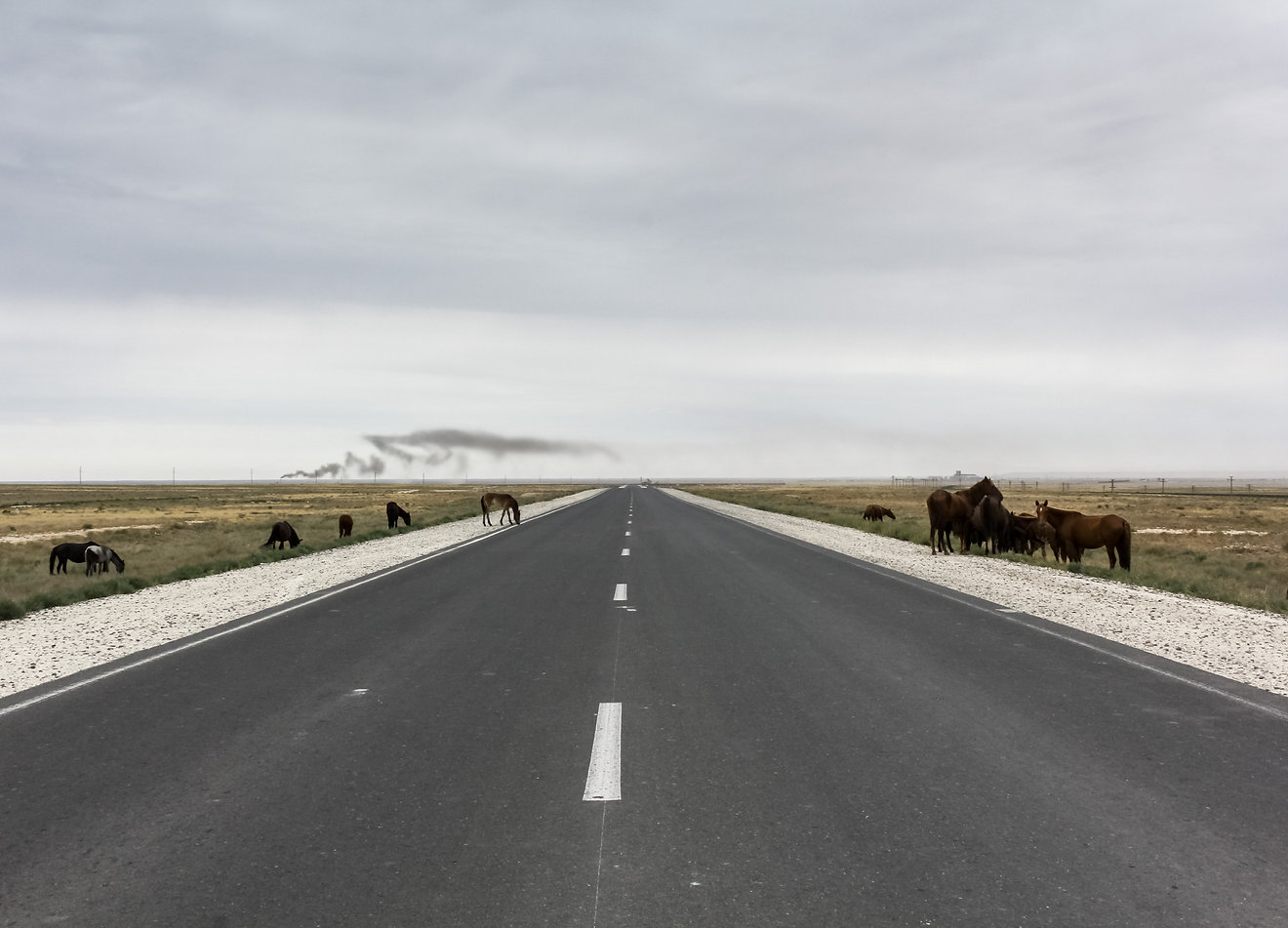 Wild horses Kazakhstan