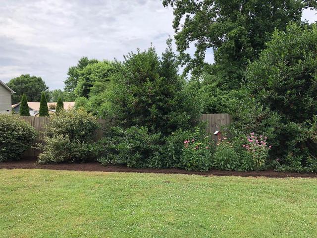 Lawn Asheville-mowing-landscaping-lawn c