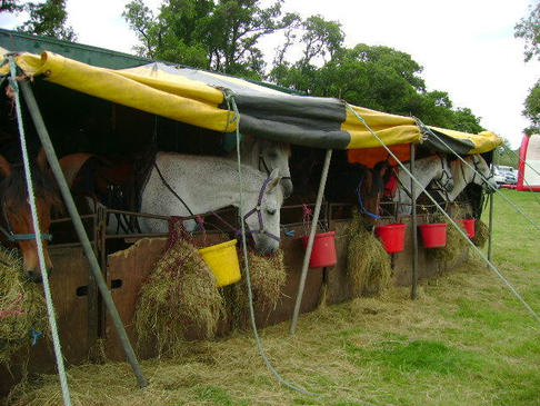 the Glendale Agricultural Show