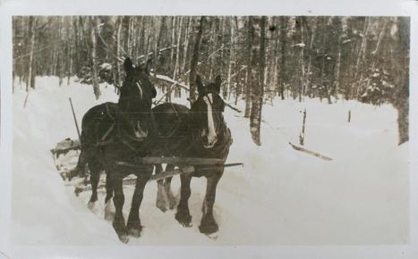 A team of horses of Norman Ralph Little