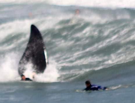 """INCRÍVEL: Baleias franca são flagradas """"brincando"""" com surfistas na Praia do Rosa, em Santa Catarina"""