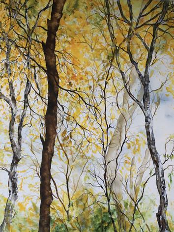 Forêt d'Or 1- Encre sur toile-100 X 120 cm.jpg