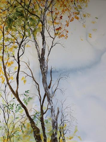 Forêt d'Or 2- Encre sur toile-100 X 120 cm.jpg
