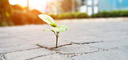 Business-Resilience-1200x565.jpg
