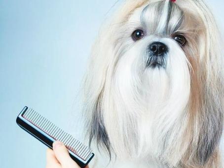 חשבו על שיער ראשכם   טיפים לשמירה על פרוות הכלב!