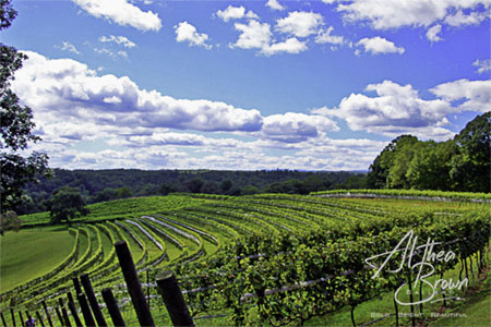 Life in the Vineyard_a