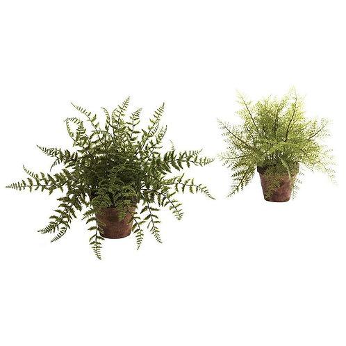 Fern w/Decorative Planter (Set of 2)