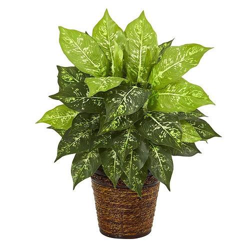 "19""  Diffenbachia Artificial Plant in Basket"