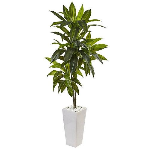 3' Dracaena Plant in White Tower Planter
