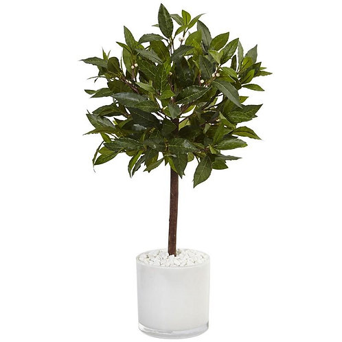 2' Sweet Bay Tree in White Glossy Cylinder