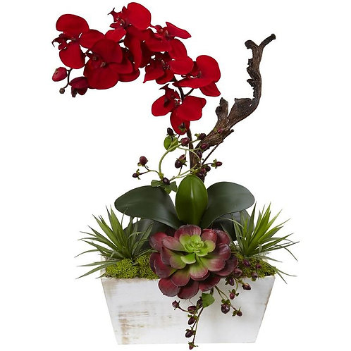 Seasonal Orchid & Succulent Garden w/White Wash Planter