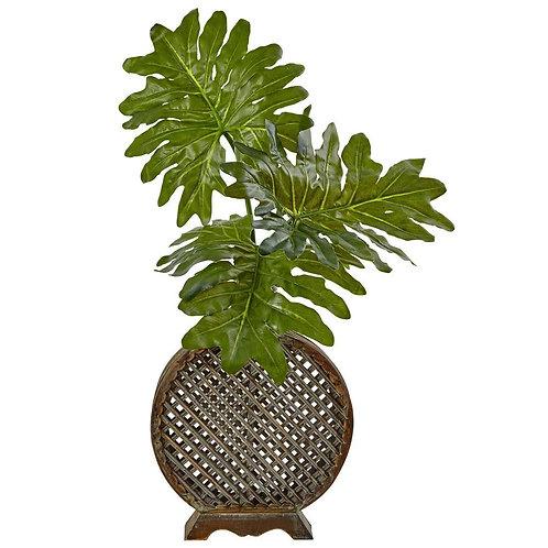 Selloum in Open Weave Vase