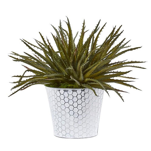 "13""  Aloe Artificial Plant in White Embossed Planter"