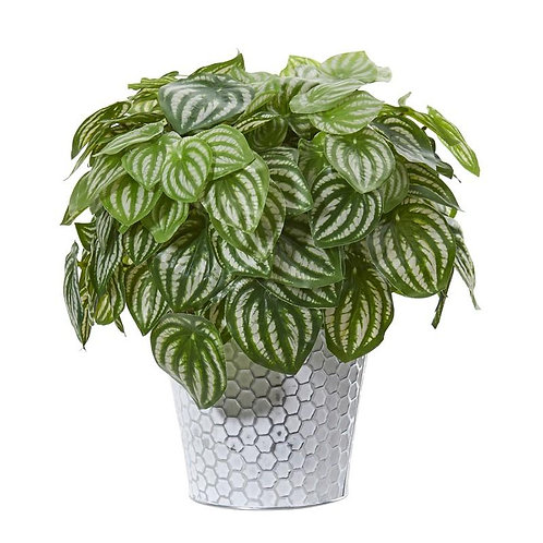 """14""""  Watermelon Peperomia Artificial Plant in White Embossed Planter"""