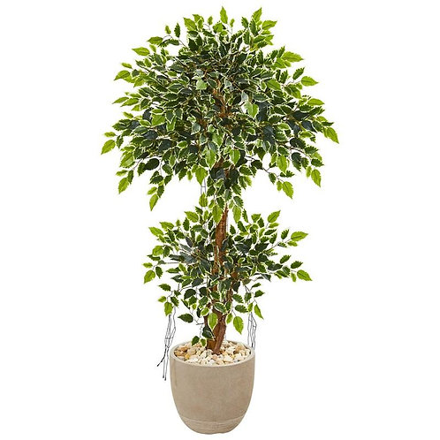 55' Variegated Ficus Artificial Tree in Sandstone Planter