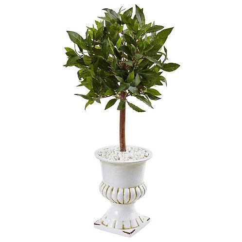 2.5' Sweet Bay Mini Topiary Tree in White Urn