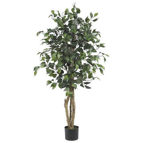 4' Ficus Silk Tree