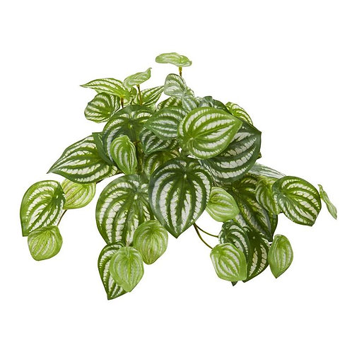 "11""  Watermelon Peperomia Hanging Artificial Bush Plant (Set of 12) (Real Touch)"