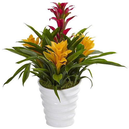 Bromeliad in White Swirl Vase