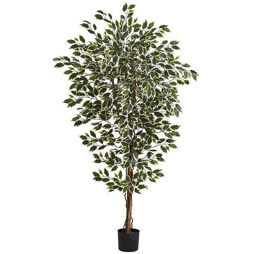 6' Hawaiian Ficus Tree x 3 w/1008 Lvs