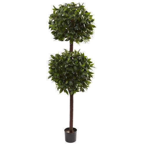 6' Sweet Bay Double Ball Topiary