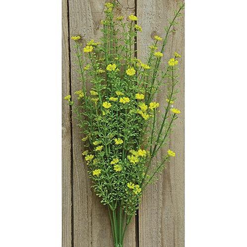 "Yellow Astilbe Bush 20"""