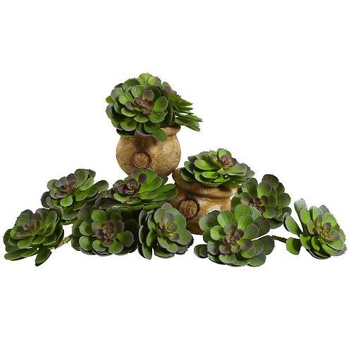 "6""  Echeveria Succulent (Set of 12)"