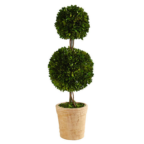 2.5' Preserved Boxwood Double Ball Topiary Tree in Decorative Planter