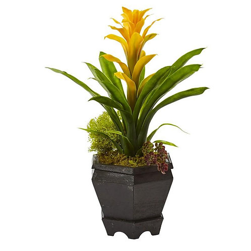 Bromeliad in Black Hexagon Planter