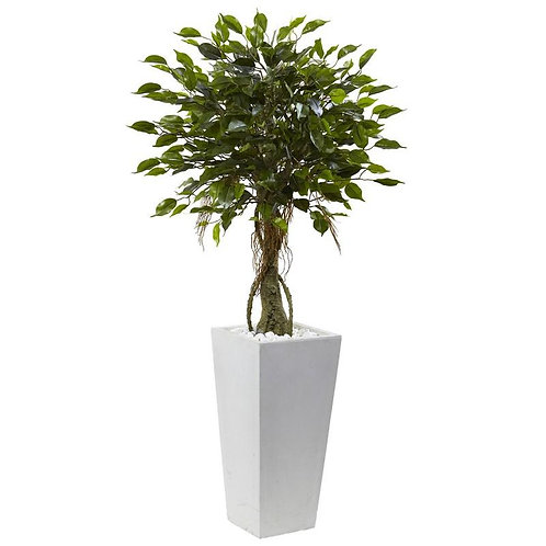 Ficus Tree with White Planter UV Resistant (Indoor/Outdoor)