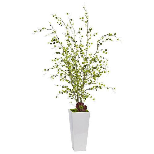 Night Willow in White Planter