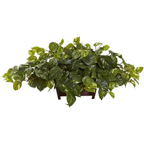 Pothos w/Rectangle Decorative Planter
