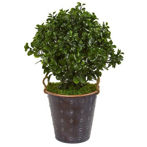 2.5' Peperomia Artificial Plant in Metal Planter UV Resistant (Indoor/Outdoor)