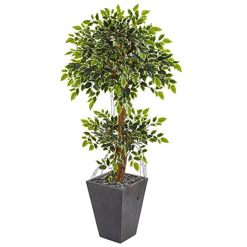 5' Variegated Ficus Artificial Tree in Slate Planter