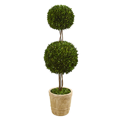 4' Preserved Boxwood Double Ball Topiary Tree in Planter