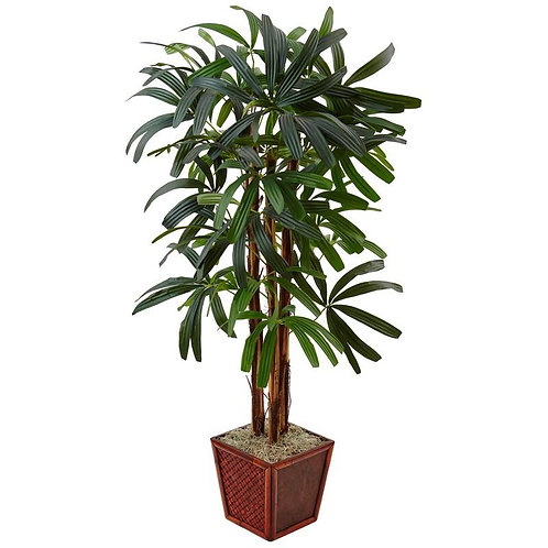 5' Raphis Palm Tree in Bamboo Planter