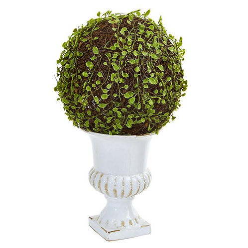 """18""""  Mohlenbechia Ball Topiary in White Urn"""