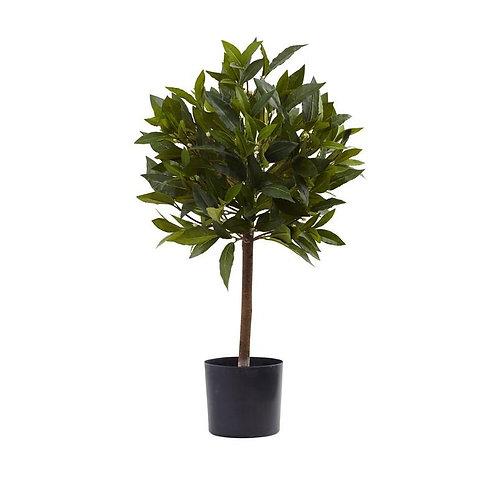 2' Sweet Bay Mini Ball Topiary