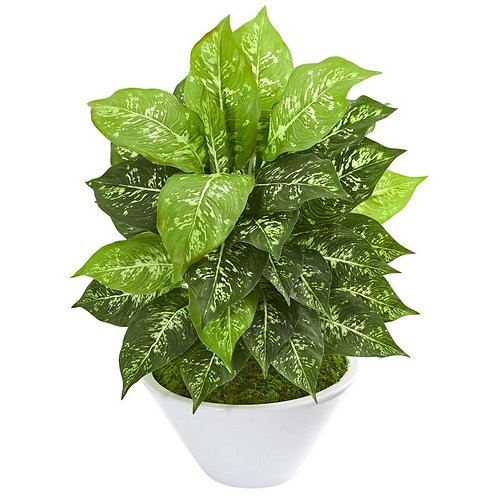 Dieffenbachia Artificial Plant in White Bowl