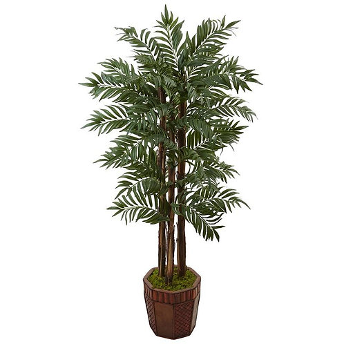 4.5' Parlour Palm Tree in Bamboo Planter