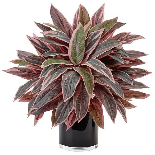 Caladium in Black Glossy Planter