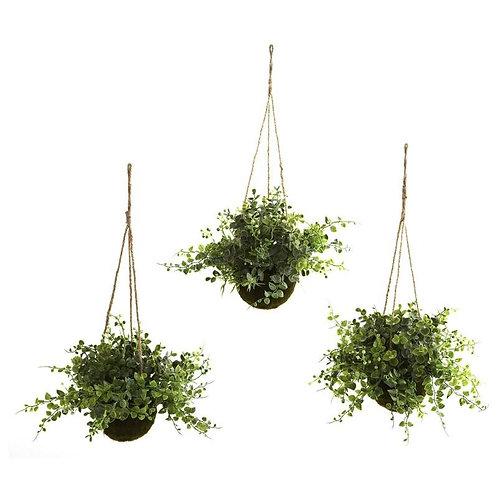 Eucalyptus, Maiden Hair & Berry Hanging Basket (Set of 3)