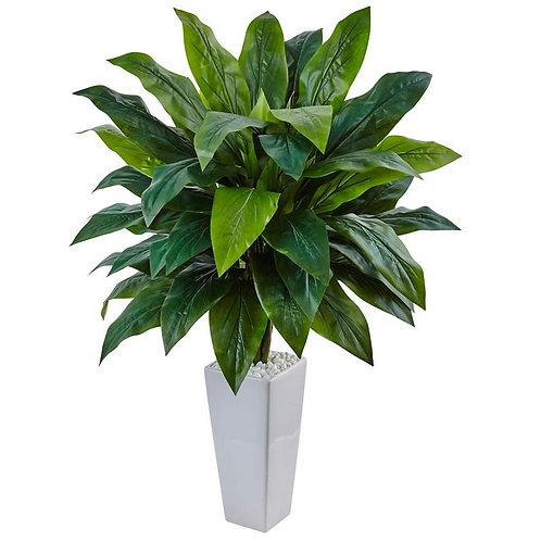 Cordyline in White Tower Planter